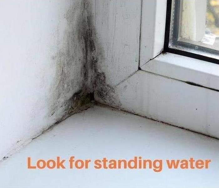 Why SERVPRO Does Your Madison Home Have Microbial Growth?