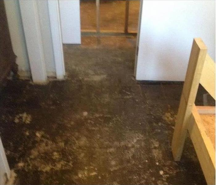 Mold Remediation Microbial Facts